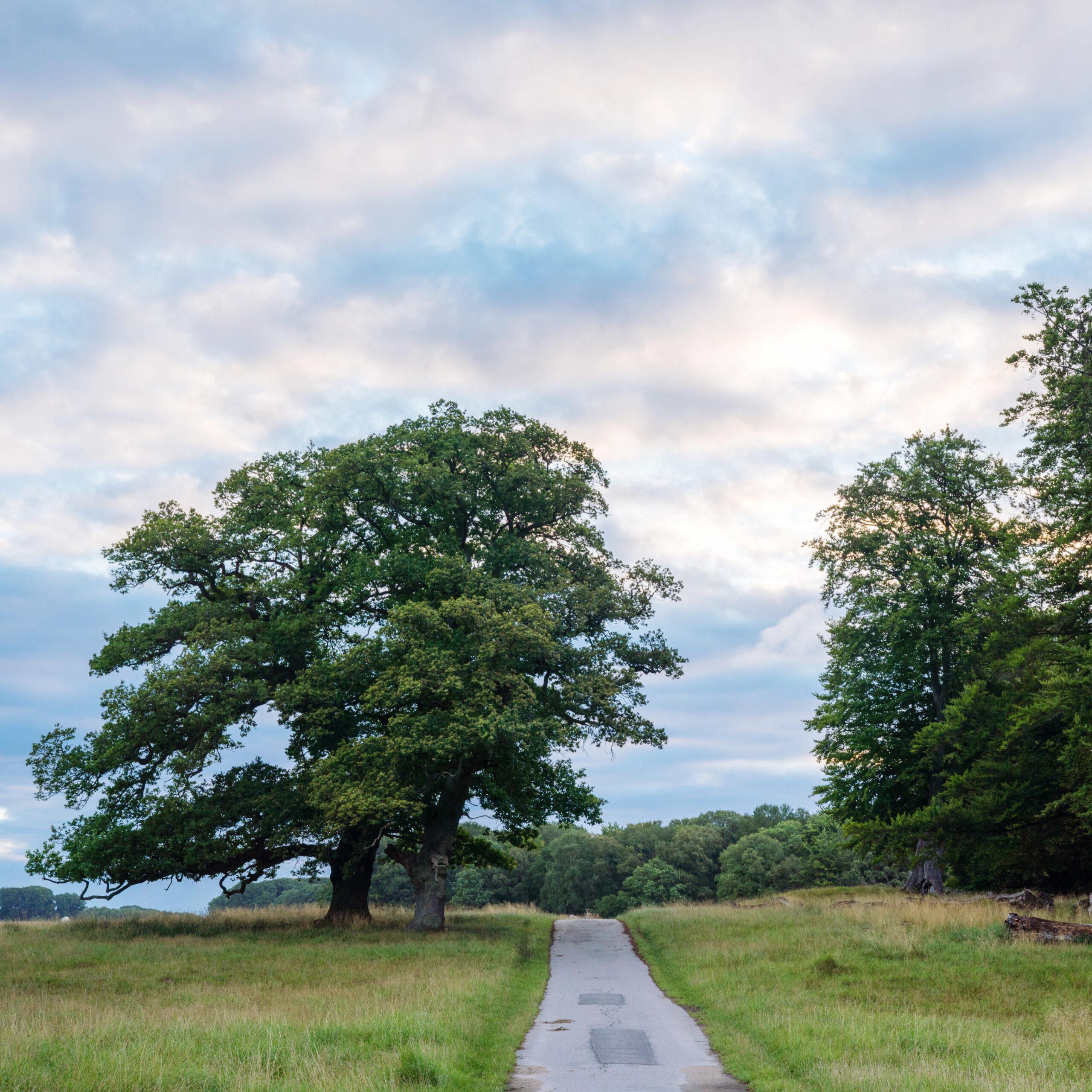 Mindful Walking Meditation med Louise Juel Severin